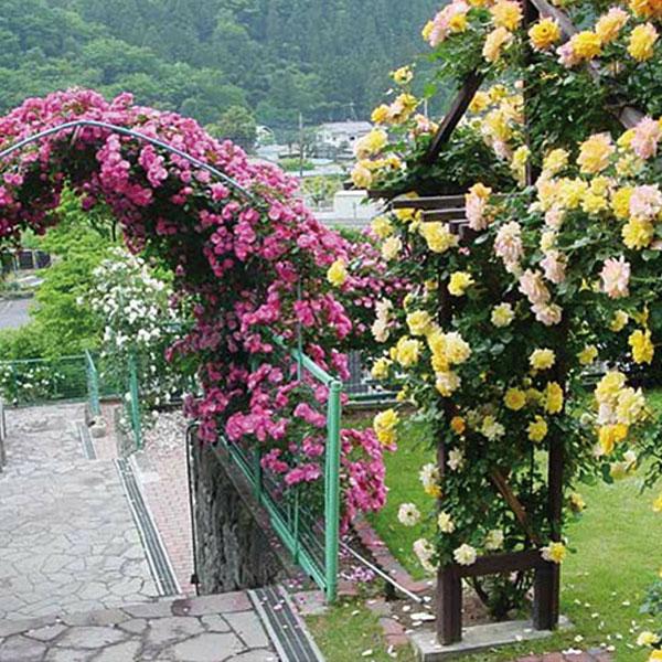 西東京墓苑のバラのアーチ