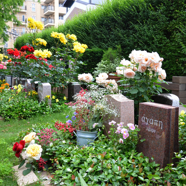 バラが咲く花小金井ふれあいパーク